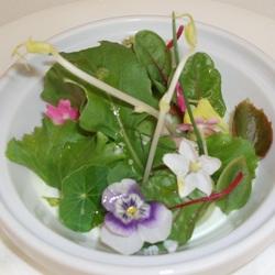 Crema de yogurt a la mostaza verde, aguacate y albahaca