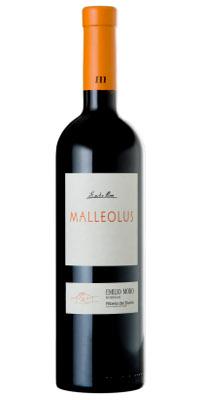 Malleolus 06